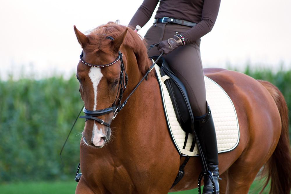 Saddle Fitting Cheval dressage bit Fitting et briddle fitting Rhône Alpes Savoie Haute Savoie